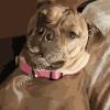dog portrait paint by number