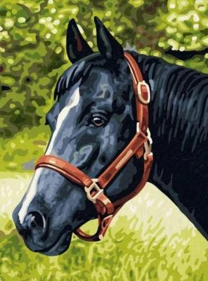 Black Horse paint by numbers