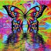 Colorful Butterfly paint by numbers