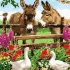 Donkeys in Farm paint by numbers