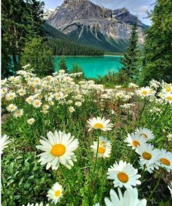 Emerald Lake paint by numbers