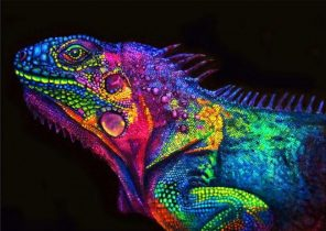 Glowing Chameleon paint by numbers