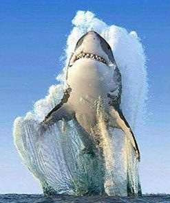 Great Shark paint by numbers