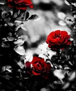 Grey Backgrounds With Roses paint by numbers