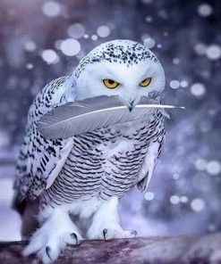Grey owl paint by numbers