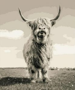 Highland Cattle paint by numbers