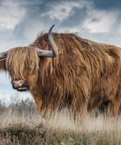 Highland Cow paint by numbers