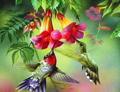 Hummingbirds paint by numbers