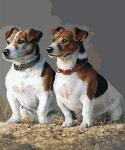 Jack Russell Dogs paint by numbers