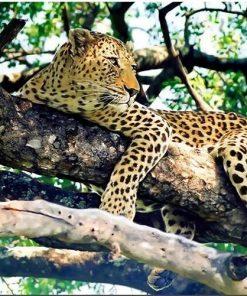 Jaguar On Tree paint by numbers