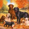 Labrador Dog paint by numbers