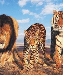 Lion Leopard And Tiger paint by numbers