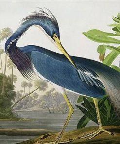 Louisiana Heron Birds paint by numbers
