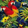 Macaw African Parrots paint by numbers