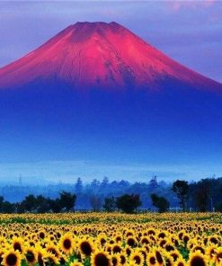 Mountains Sunflowers Fields paint by numbers