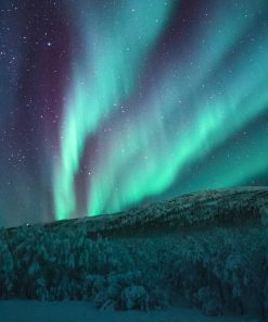 Northern Lights Forest paint by numbers