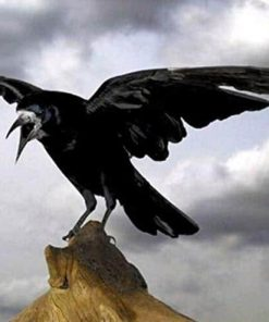 Ominous Crow paint by numbers