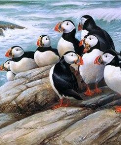 Puffins on Rock paint by numbers
