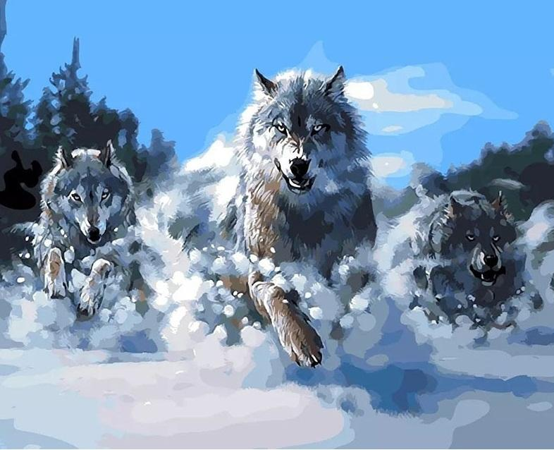 Abstract Painting Wolves Animals Kits - DIY Paint By Numbers - Numeral Paint