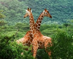 Giraffe Animals - DIY Paint By Numbers - Numeral Paint