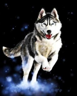 Huskies Animals Modern Painting - DIY Paint By Numbers - Numeral Paint