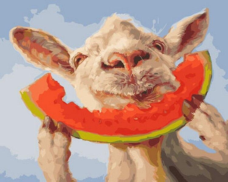 Sheep Eating Watermelon paint by numbers