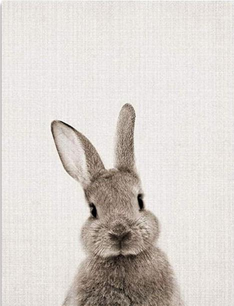 grey rabbit paint by numbers