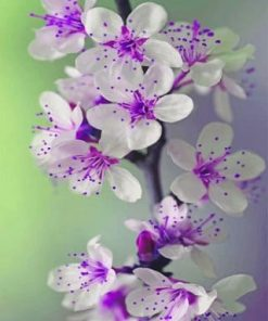 Purple Archid Flower paint by numbers