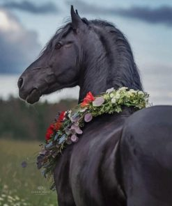 Black Horse paint by number