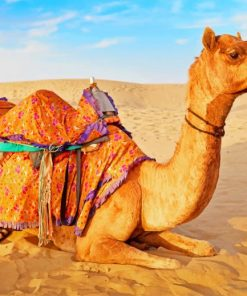 Camel In Desert paint by numbers