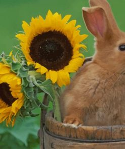 Rabbit And Sunflowers paint by numbers