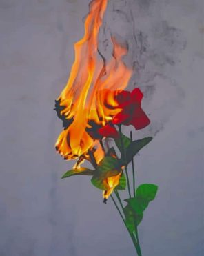 Rose On Fire paint by numbers