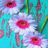 White Pink Daisies paint by numbers