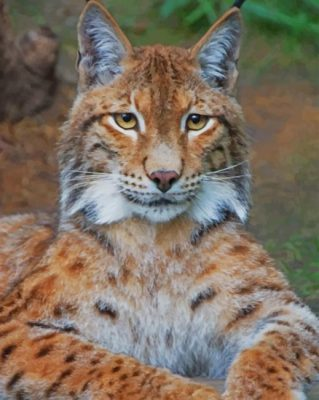 Bobcat paint by numbers