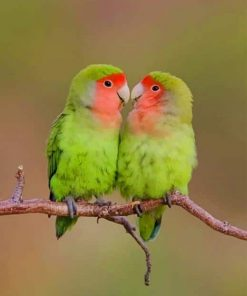 Rosy faced lovebirds Paint by numbers