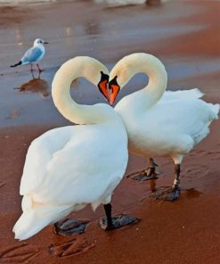 White Swans In love paint by numbers