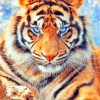Angry Tiger paint by numbers