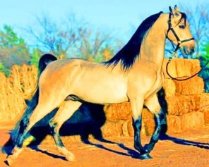 Arabic Horse paint by numbers