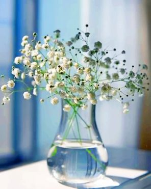Baby's Breath Glass Vase paint by numbers