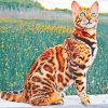 Bengal Cat paint by numbers