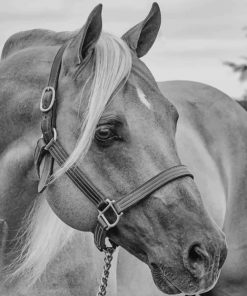 Black And White Horse Paint by numbers