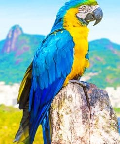 Blue And Yellow Parrot paint by numbers