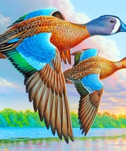 Blue Winged Teal Paint by numbers