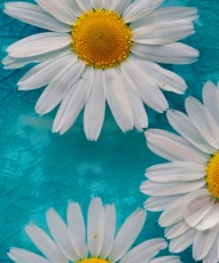 Common Daisy Paint by numbers