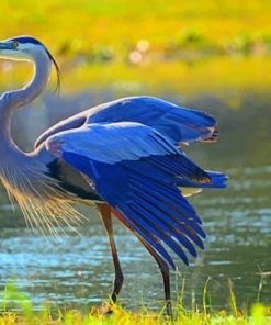 Great Blue Heron Paint by numbers