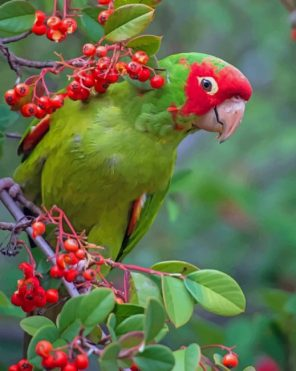Green Parrot paint by numbers
