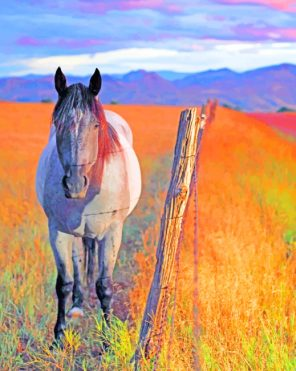 Horse In Field paint by numbers