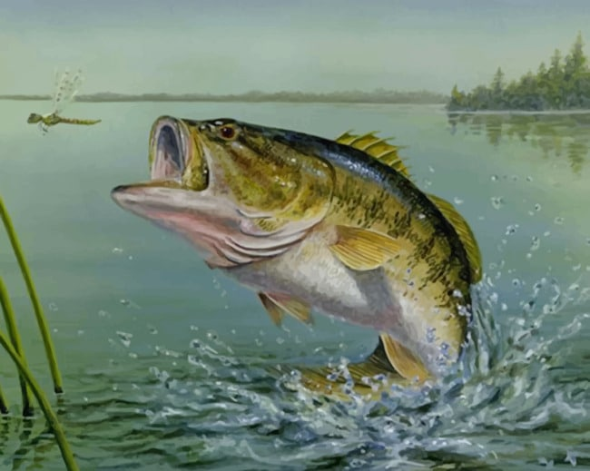 Largemouth Bass Fish Paint by numbers