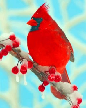 Red Cardinal paint by numbers