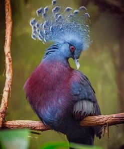Victoria Crowned Pigeon Paint by numbers